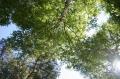 木漏れ日7