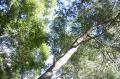 木漏れ日8
